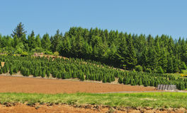 Tree Farm Royalty Free Stock Photography
