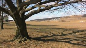 Tree on farm. Video of tree on farm stock video