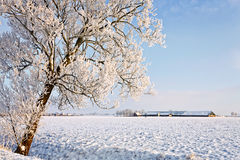 Tree and farm in a white winter landscape Stock Image