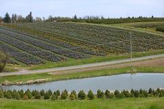 Tree farming. Royalty Free Stock Image