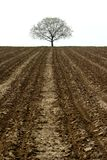 Tree and farmland royalty free stock photo
