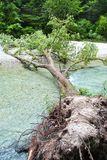Tree fell. Into the river with stones and wood as a background royalty free stock images