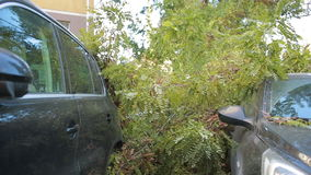 Tree fell on the car. disaster. strong wind. stock video