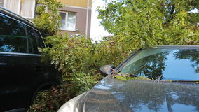 Tree fell on the car. disaster. strong wind. Tree fell on the car stock footage
