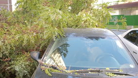 Tree fell on the car. disaster. strong wind. Tree fell on the car stock video