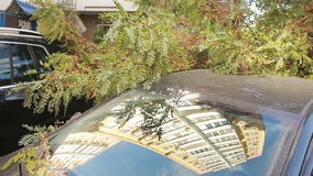 Tree fell on the car. disaster. strong wind. Tree fell on the car stock video footage
