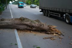 The tree fell on the road. Danger to traffic.  royalty free stock images