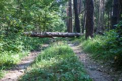 The tree fell on the road Royalty Free Stock Photography