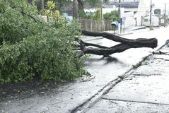 Tree that fell after a storm in the urban area. old tree trunk fallen in the city. Tree fell after a storm in the urban area. old tree trunk fallen in city royalty free stock photos