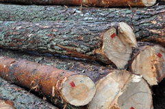 Tree felled in the forest Stock Photo