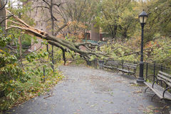 Tree felled by Hurricane Sandy, Manhattan. Tree felled by Hurricane Sandy in front of Museum of Natural History, Columbus Avenue, Upper West Side, Manhattan Royalty Free Stock Photography