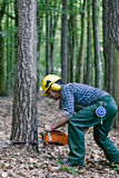 Tree feller in the woods. Lumberjack cuts a tree with the chainsaw stock photos