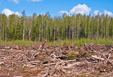 Tree felling Stock Photos