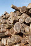 Tree felling. Felled logs stacked in a pile outdoors Royalty Free Stock Photos