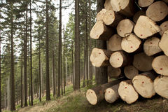 Tree felling Royalty Free Stock Images