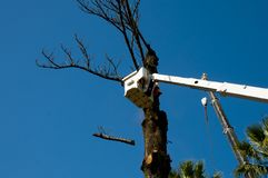 Tree Felling. In Bucket Lift royalty free stock photo