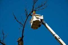 Tree Felling. In Bucket Lift royalty free stock image