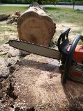 Tree felling: chainsaw with fallen tree stock image