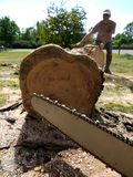 Tree felling: chainsaw and man moving log. A lumberjack hauling away a log with chainsaw in foreground Stock Photography