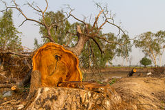Tree felling cut. View of dead tree felling cut, broken down by country royalty free stock image