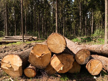 Tree felling Stock Photo