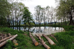 Tree felling on a lake in Bavaria Royalty Free Stock Images