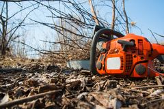 Tree felling with a large chainsaw. Cutting into tree trunk stock images