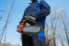 Tree felling with a large chainsaw. Cutting into tree trunk royalty free stock images