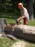 Tree felling: lumberjack chainsawing tree trunk royalty free stock image