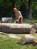 Tree felling: lumberjack man chainsawing. A lumberjack chainsawing a fallen tree trunk into firewood Stock Photos