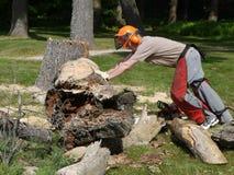 Tree felling: lumberjack man pushing fallen tree. A lumberjack man pushing a fallen tree trunk Royalty Free Stock Photo
