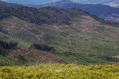 Tree felling on the mountain expanses. Stock Photo