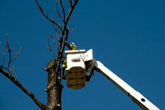 Tree Felling. In Bucket Lift royalty free stock images