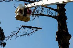 Tree Felling. In Bucket Lift stock images