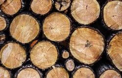 Tree felling trees slices closeup Royalty Free Stock Photos