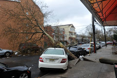 Tree felt down to the car. BROOKLYN, NY - OCTOBER 29: Tree felt down to the car in the Sheepsheadbay neighborhood due to flooding from Hurricane Sandy in Stock Images