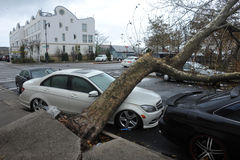 Tree felt down to the car. BROOKLYN, NY - OCTOBER 29: Tree felt down to the car in the Sheepsheadbay neighborhood due to flooding from Hurricane Sandy in Royalty Free Stock Photography