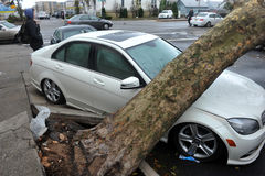 Tree felt down to the car. BROOKLYN, NY - OCTOBER 29: Tree felt down to the car in the Sheepsheadbay neighborhood due to flooding from Hurricane Sandy in Royalty Free Stock Images