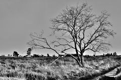 Tree in the fen Royalty Free Stock Image
