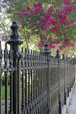 Tree and fence. A fence with a flowering tree in the background Royalty Free Stock Photo