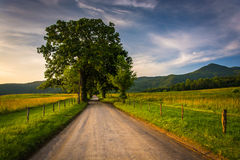 Tree and fence along a dirt road at Cade's Cove, Great Smoky Mou Royalty Free Stock Photos