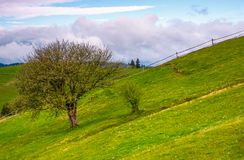 Tree and a fence on a grassy hill. Lovely springtime scenery in Carpathian mountains with cloud on a blue sky Stock Images