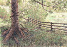 Tree and fence Stock Photo