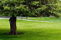 Tree, fence, lawn Royalty Free Stock Images