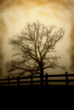 Tree on fence line antique look Royalty Free Stock Image