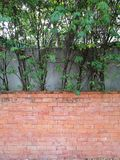 Tree fence and Red brown brick block wall in backyard garden at home Stock Photo