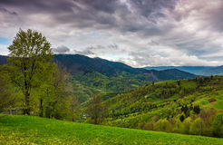 Tree and fence on rural meadow in mountains Stock Images