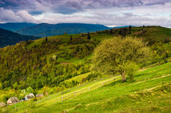 Tree and fence on rural meadow in mountains Stock Photography
