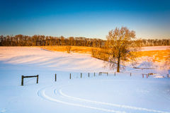 Tree and fence in a snow-covered field in rural York County, Pen Royalty Free Stock Images