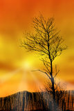 Tree, fence & sunset Royalty Free Stock Images